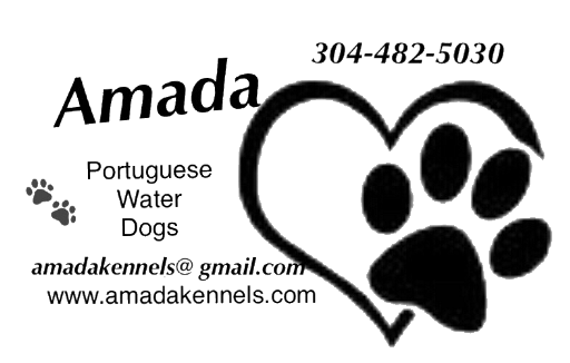 Amada Portuguese Water Dogs
